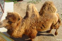 сафари парк тайган в крыму фото 5