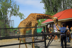 сафари парк тайган в крыму фото 10
