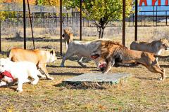 сафари парк тайган в крыму фото 2