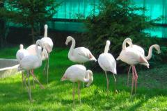 сафари парк тайган в крыму птицы фото 2