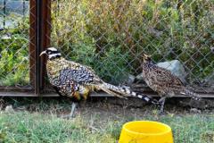 сафари парк тайган в крыму птицы фото 6