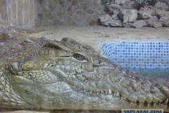 сафари парк тайган в крыму крокодилы фото 1