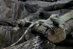 сафари парк тайган в крыму крокодилы фото 2