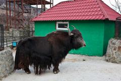 зоопарки сказка ялта фото 11