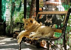 зоопарки сказка ялта фото 4
