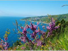 Крым весной: куда поехать