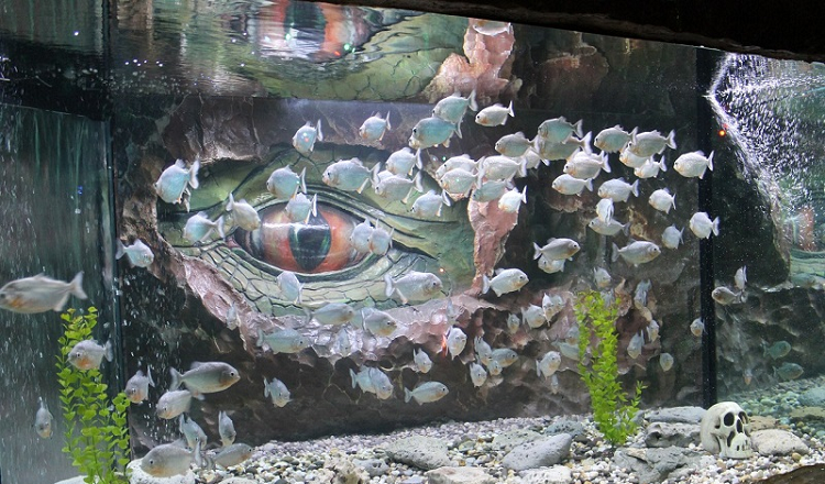 """Рыбы в аквариуме """"Акула"""", Евпатория"""