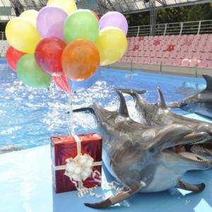 Дельфинарий в Евпатории: зрелищное шоу морских львов, котиков, дельфинов
