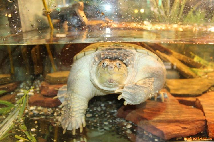 Черепаха в экзотариуме в Евпатории