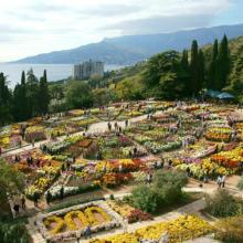 Как пройдет Бал хризантем в Никитском ботаническом саду в 2019