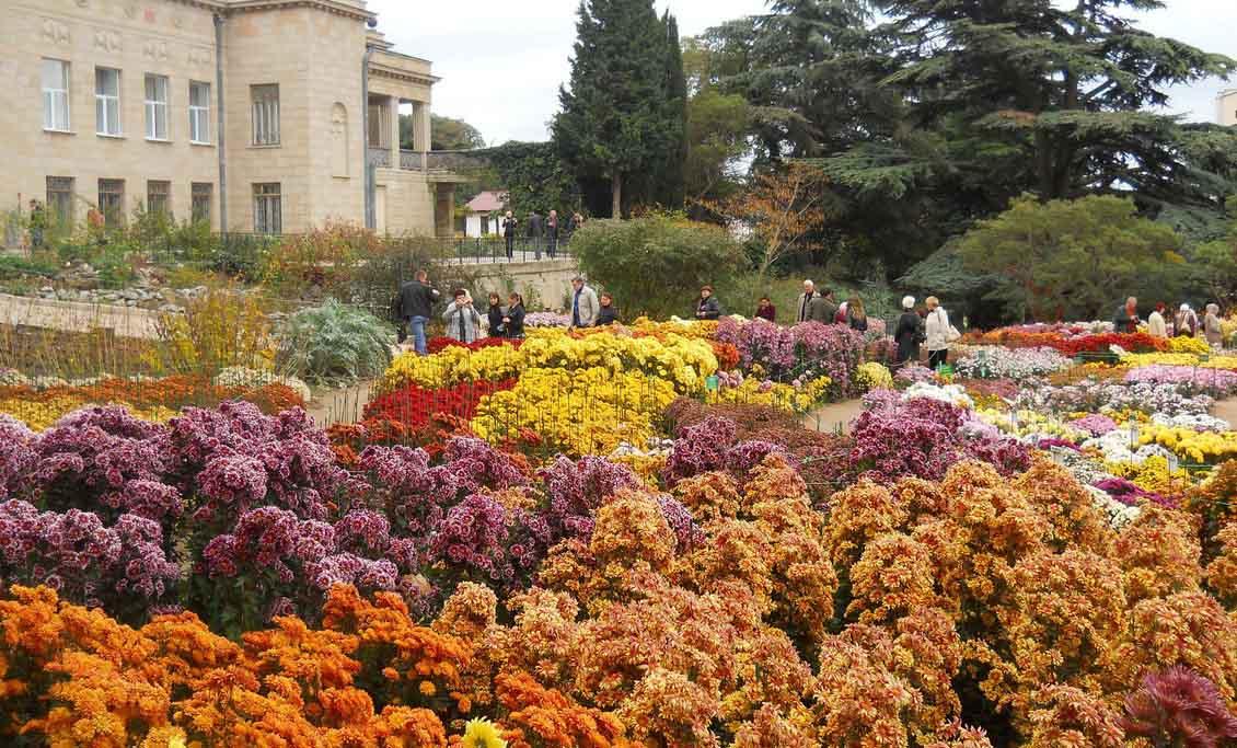 Никитский ботанический сад бал хризантем