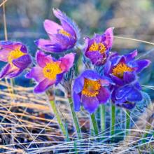 Крым в марте 2021: погода, события, праздники, экскурсии