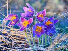 Крым в марте 2020: погода, события, праздники, экскурсии