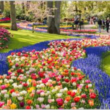 Когда пройдет выставка тюльпанов в Никитском ботаническом саду?