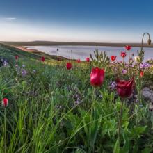 Розовое озеро в Крыму: жемчужина Опукского заповедника в Керчи