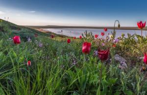 Розовое озеро в Крыму фото