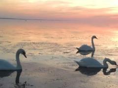 Лебяжьи острова в Крыму — заповедник Северного Крыма