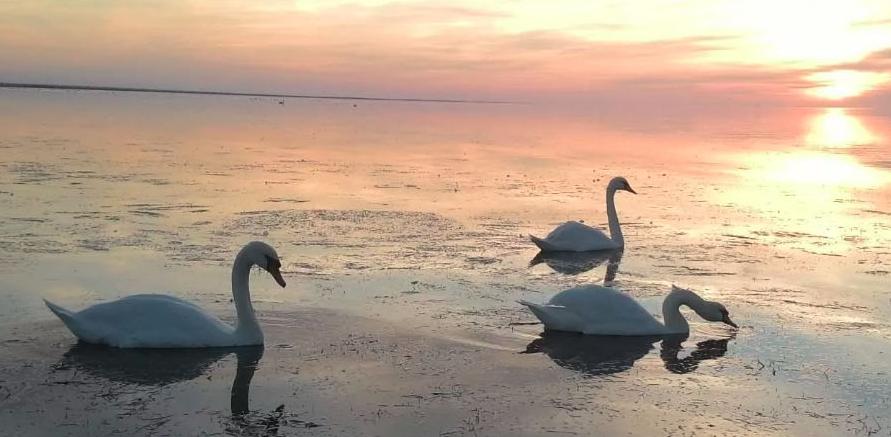 Лебяжьи острова в Крыму фото