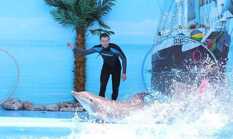 Алуштинский дельфинарий Немо