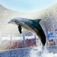 Дельфинарии Крыма 2020: список, адрес на карте, рейтинг лучших