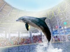 Дельфинарии Крыма 2021: список, адрес на карте, рейтинг лучших