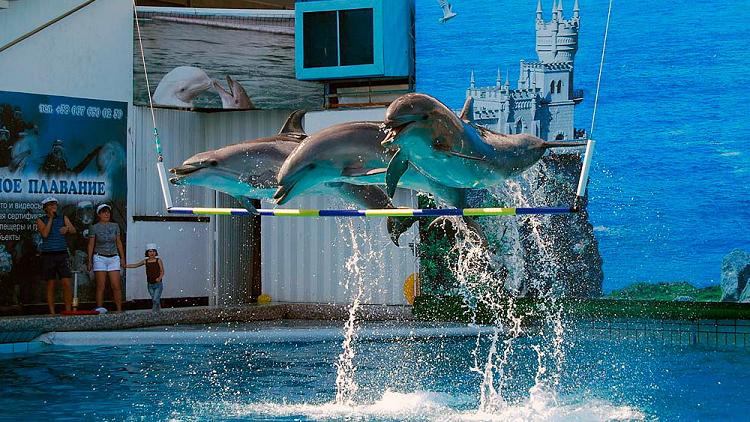 Дельфинарий аПартените