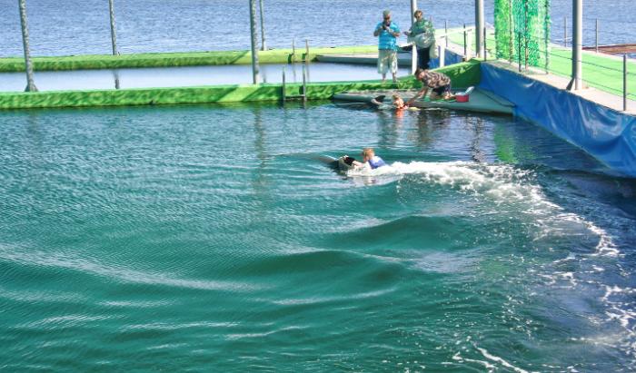 Дельфинарий в Заливе Донузлав