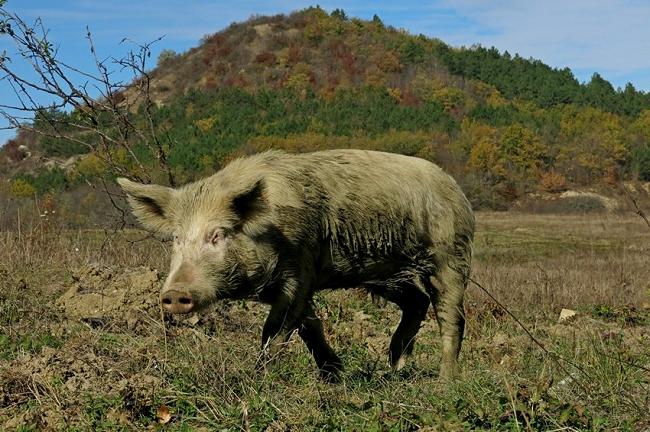 Дикие животные Крыма
