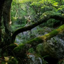 Крымские леса и его обитатели