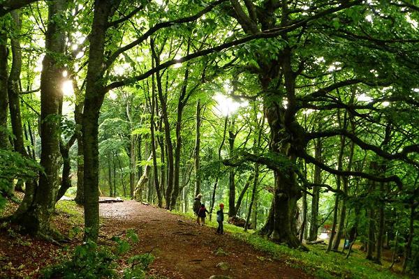 Какой лес в Крыму