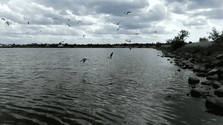Сакское озеро, Крым фото