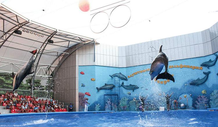 дельфинарий акварель в алуште