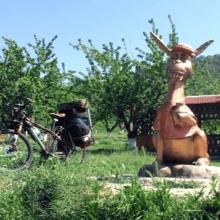 Контактный зоопарк в Бахчисарае (Крым) — ослиная ферма «Чудо Ослик»