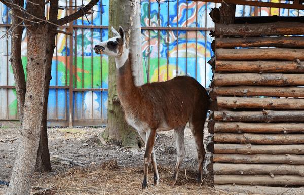 Симферопольский зоопарк фото.
