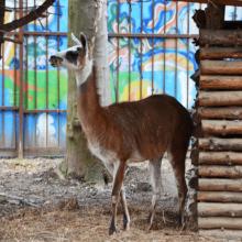 Зоопарк в Симферополе на территории детского парка