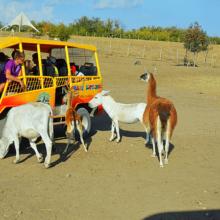 Парк антилоп в Крыму: кто живет на Сафари Ранч? Пони, ослики, ламы, олени и лошади!