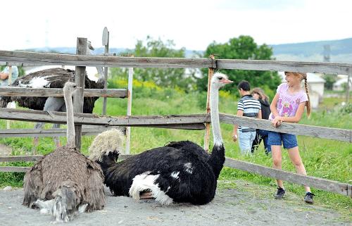 Страусиная ферма в Денисовке