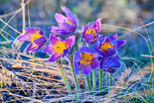 Крым в марте фото 5