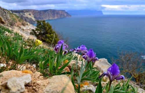 Крым в марте фото 8
