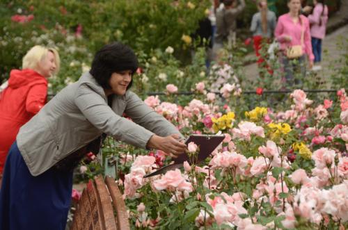 Парад роз в Никитском ботаническом саду фото 1