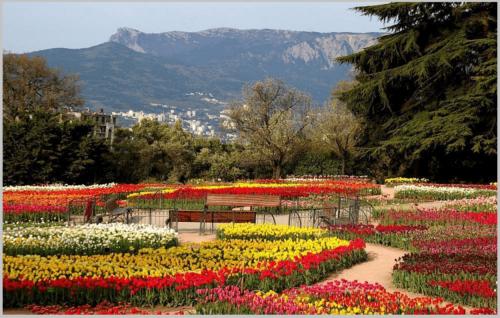 никитский ботанический сад парад тюльпанов
