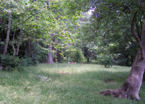 Дворец Паниной  фото парка 1