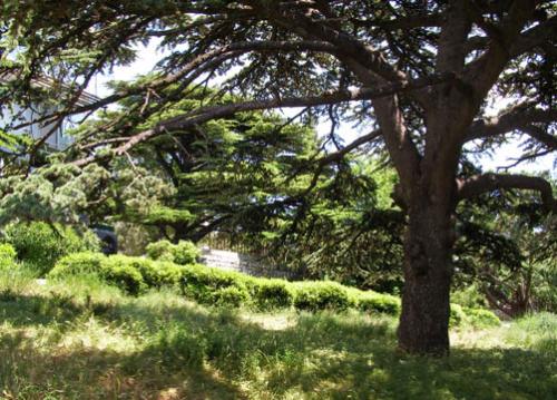 Дворец Паниной  фото парка 2