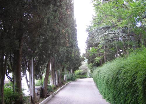 Дворец Паниной  фото парка 3