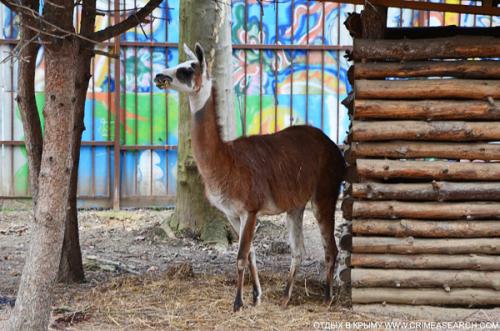 Зоопарк в Симферополе фото 1