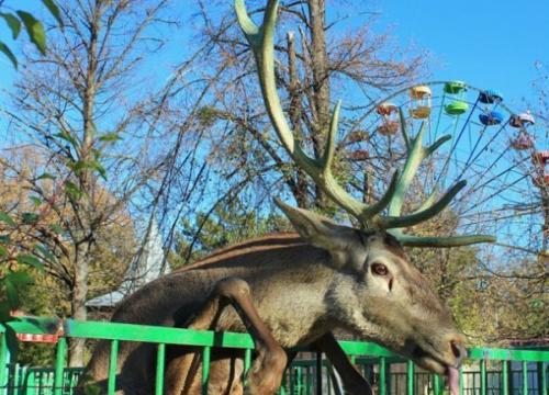 Зоопарк в Симферополе фото 6