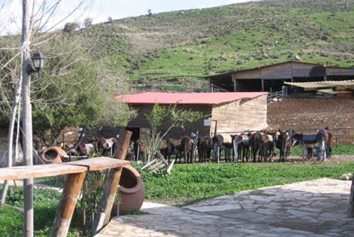 Ослиная ферма в бахчисарае фото 4