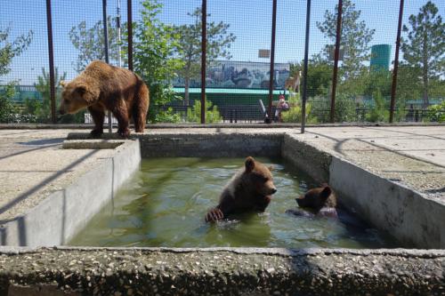 Парк львов тайган -медведи
