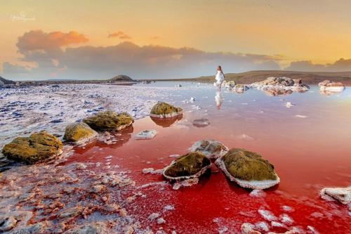 Розовое озеро в Крыму фото 2