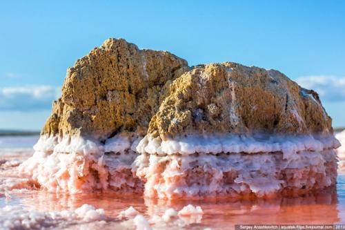Розовое озеро в Крыму фото 4